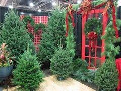 R62 Scotch Pine Incense Sticks