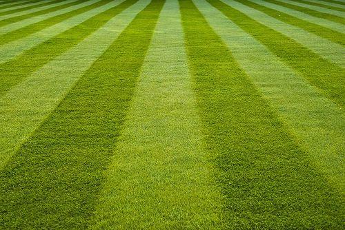 118 Fresh Cut Grass Small Spray