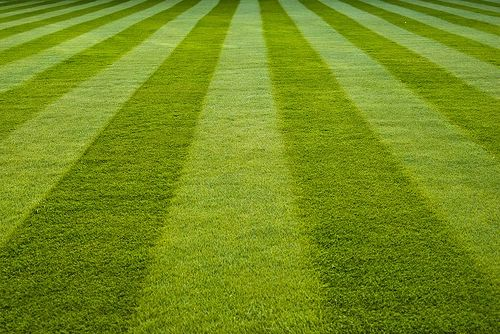 118 Fresh Cut Grass D-Stink-Em