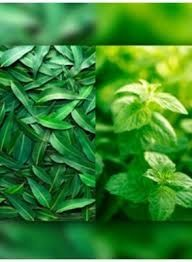 1 Eucalyptus & Spearmint Small Spray