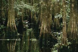 16 Cypresswood Dram Oil