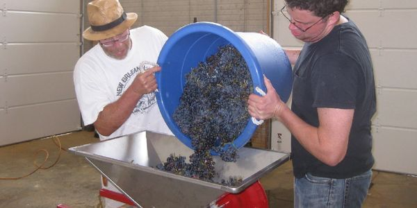 pouring grapes into crusher