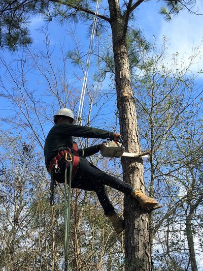 Texas Tree Elite Tree Trimming and Pruning services