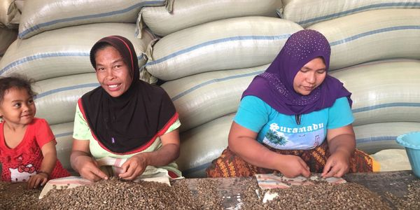 women coffee producers Sumatra, Ipak Bensu womens co-operative.  Central Aceh. green coffee  beans