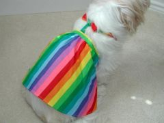 Dog Dresses: Handmade SUMMER BREEZE Colorful Cotton Rainbow Print Dog Dress USA