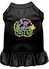 DOG DRESSES: Screen Print Dress THROW ME SOMETHING MISTER Poly/Cotton with Ruffle trim Various sizes & Colors by MiragePetProducts