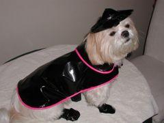 Dog Raincoats: Shiny Pleather Dog Raincoat with Cotton Liner