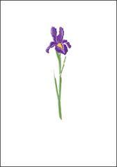 Iris Note Cards