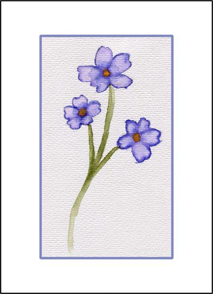Periwinkle Flower Study - Watercolor