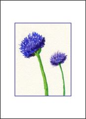 Chive Flowers - Watercolor