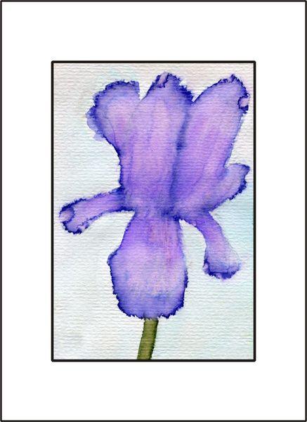 Purple Iris - Watercolor