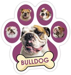 Bulldog with Bone Paw Magnet !! SALE !!