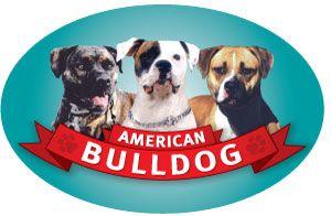 American Bulldog Oval Magnet