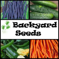 Spring/Summer 4 Pack: Dwarf Beans, Carrot, Cucumber, and Zucchini