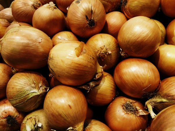 Onion - Gladalan Brown