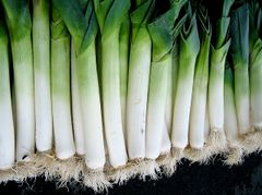 Leek - Giant Carentan
