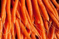 Carrot - All Seasons