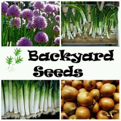 Alliums 4 Pack: Brown Onion, Leek, Chives and Spring Onion