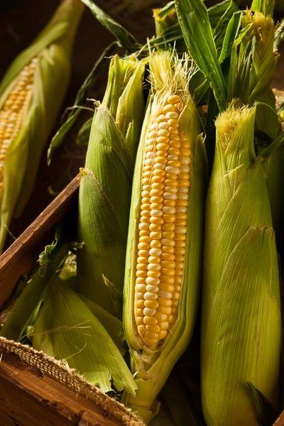 Sweet Corn - Jolly Roger