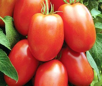 Tomato - Roma