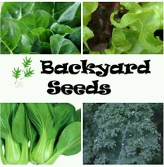 Winter Leafy Vegetable 4 Pack: Lettuce, Kale, Pak Choi and Silverbeet
