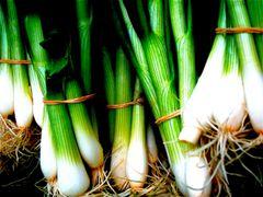 Spring Onion - White Lisbon