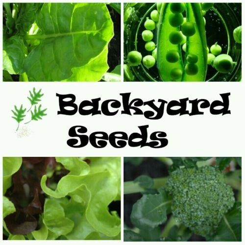 Winter/ Spring 4 Pack: Broccoli, Lettuce, Pea, and Silverbeet