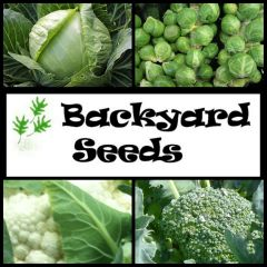 Brassica Vegetable 4 Pack: Broccoli, Brussels Sprouts, Cabbage & Cauliflower
