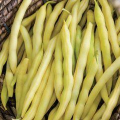 Beans - Wax Cherokee