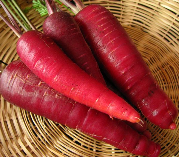Carrot - Purple Dragon