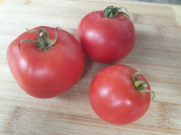 Tomato - Grosse Lisse