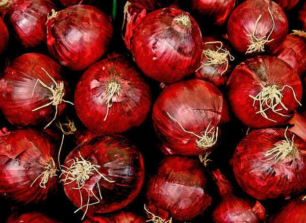 Onion - California Red Shine