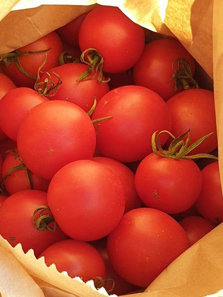 Tomato - Red Bluff