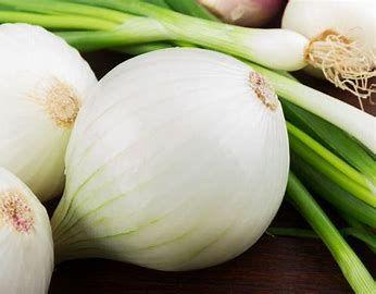 Onion - Gladalan White