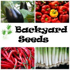 Spring 4 Pack: Capsicum, Chilli, Eggplant and Leek