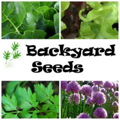 Summer 4 Pack: Chives, Lettuce, Parsley and Silverbeet