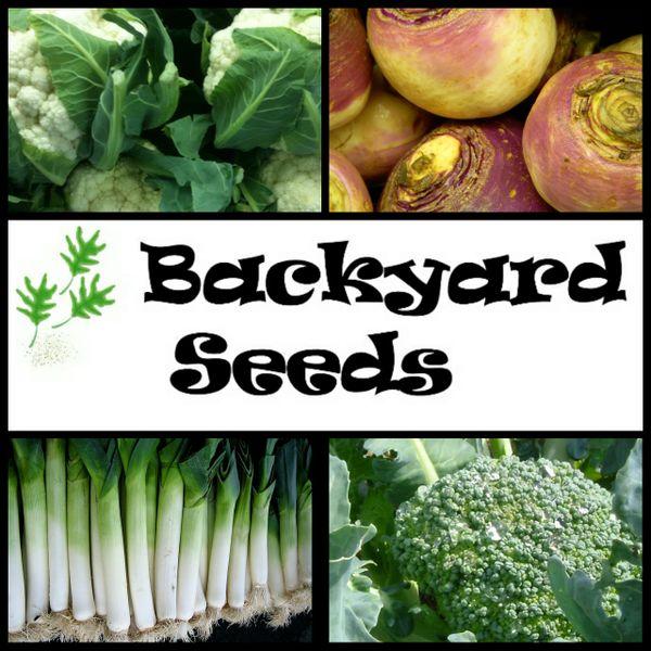 Summer (late) 4 Pack: Broccoli, Cauliflower, Leek, and Swede