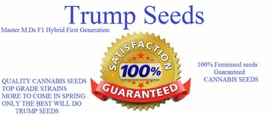 trump seeds - cannabis seeds