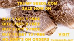 SALE 2 SEEDS FOR THE PRICE OF 1 NO LIMITS ON HOW MANY YOU ORDER