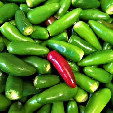 Local Fresh Chile