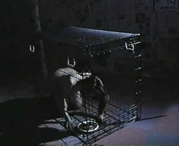 Asian-Psycho-Vol 7 - 1 hr 23 min - *used DVD in paper sleeve-no art-(Q=G-VG)