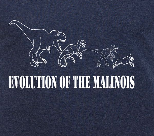 Evolution of the Malinois