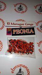 Peonia - Peony