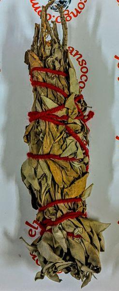 Medium Sage - Salvia Medio