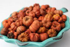Mini Pumpkin Potpourri