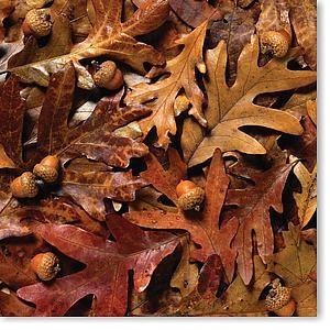 Leaves & Acorns 12x12 Paper