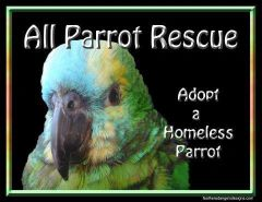 All Parrot Rescue
