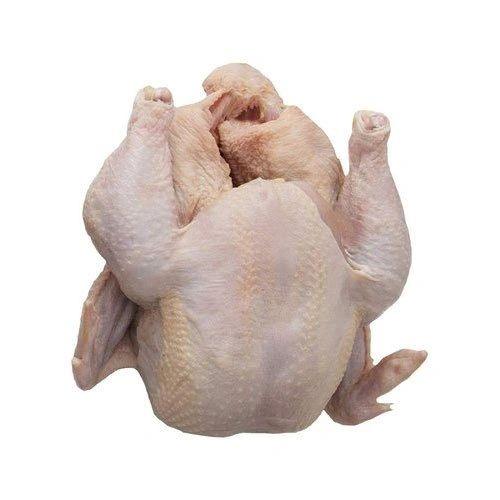Broiler Chicken Raw Live 2kg(Berhampur)