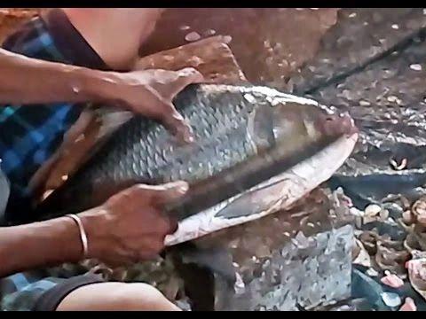 Vakura Catla River Fish Cutting(No Head) 1Kg(Berhampur)