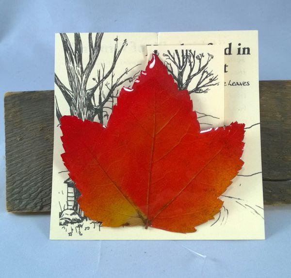 genuine maple leaf ornament or suncatcher genuine maple leaf ornament or suncatcher